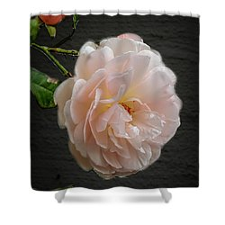 Pink A8 Shower Curtain by Leif Sohlman