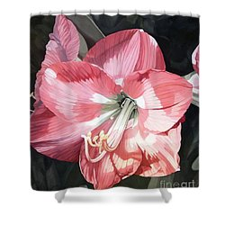 Pink Amaryllis Shower Curtain