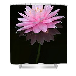 Pink And Alone Shower Curtain by Sabrina L Ryan