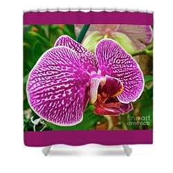 Pink And Green Orchid Floral Garden 957 Shower Curtain
