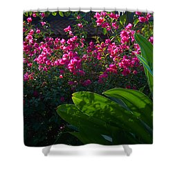 Pink And Green Shower Curtain by Jim Walls PhotoArtist