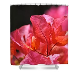 Pink And Orange Bougainvillea Shower Curtain by Rona Black