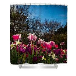 Pink And Purple Tulips Shower Curtain by John Roberts