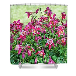 Shower Curtain featuring the photograph Pink And White Columbine by Sue Smith