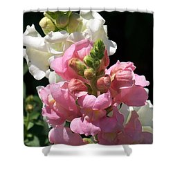 Shower Curtain featuring the photograph Sweet Peas by Eunice Miller