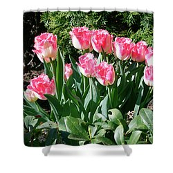 Pink And White Fringed Tulips Shower Curtain by Louise Heusinkveld