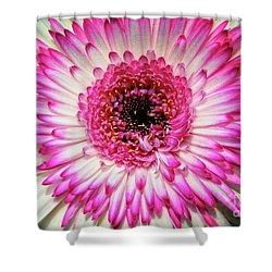 Pink And White Gerbera Daisy Shower Curtain by Jim and Emily Bush