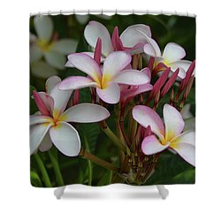 Shower Curtain featuring the photograph Pink And White Plumeria by Pamela Walton