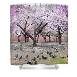 Shower Curtain featuring the photograph Pink And White Spring Blossoms - Boston Common by Joann Vitali