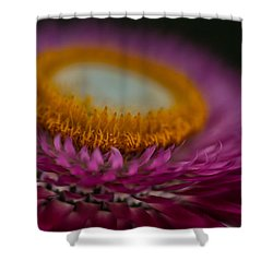 Pink And Yellow Strawflower Close-up Shower Curtain
