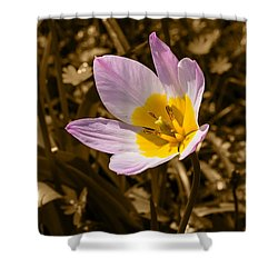 Pink And Yellow Tulip On Sepia Background Shower Curtain