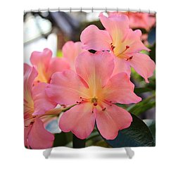 Pink And Yellow Vireya Shower Curtain