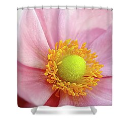 Pink Anemone Shower Curtain by Kaye Menner