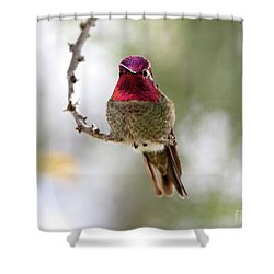 Pink Anna's Hummingbird Shower Curtain