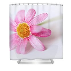 Shower Curtain featuring the photograph Pink Aster Flower II by Nick Biemans