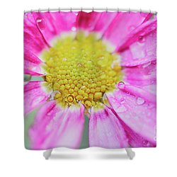 Shower Curtain featuring the photograph Pink Aster Flower With Raindrops by Nick Biemans