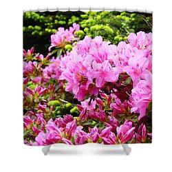 Pink Azalea Flowers Landscape 11 Art Prints Canvas Artwork Framed Art Cards Shower Curtain by Baslee Troutman