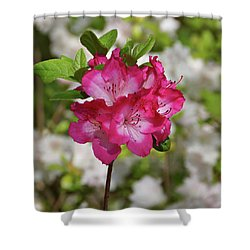 Shower Curtain featuring the photograph Pink Azalea by Sandy Keeton