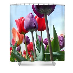 Pink Baby In Tulip Garden Shower Curtain