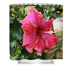 Pink Beauty Shower Curtain by Mary Haber