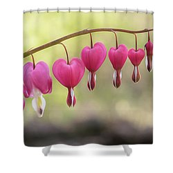Pink Bleeding Hearts Vine Shower Curtain