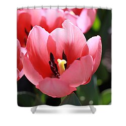 Pink Bloom Shower Curtain