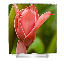 Pink Blossoming Flower Shower Curtain by Tomas del Amo - Printscapes