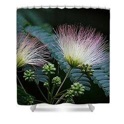 Pink Mimosa  Shower Curtain