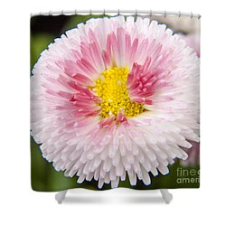 Pink Button Flower Shower Curtain