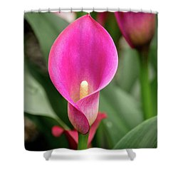 Pink Calla Shower Curtain