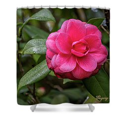 Shower Curtain featuring the photograph Pink Camelia 02 by Gregory Daley  PPSA