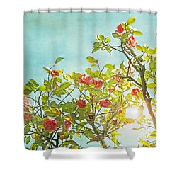 Pink Camellia Japonica Blossoms And Sun In Blue Sky Shower Curtain by Brooke T Ryan