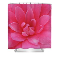 Pink Camellia Shower Curtain by Juergen Roth