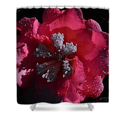 Pink Camillia And Selected Color Shower Curtain by Warren Thompson