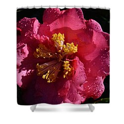 Pink Camillia With Raindrops Shower Curtain by Warren Thompson