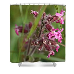 Pink Campion In August Shower Curtain