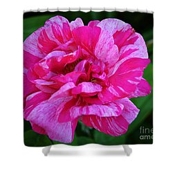 Pink Candy Stripe Rose Shower Curtain