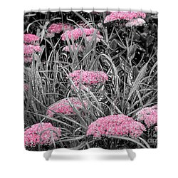 Pink Carved Cowslip Shower Curtain