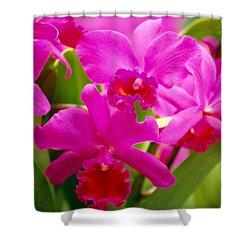 Pink Cattleya Orchids Shower Curtain by Allan Seiden - Printscapes