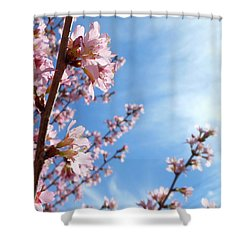 Pink Cherry Blossoms Branching Up To The Sky Shower Curtain