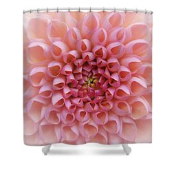 Pink Chrusanthemum Shower Curtain