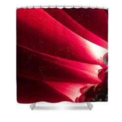 Pink Chrysanthemum Flower Petals  In Macro Canvas Close-up Shower Curtain