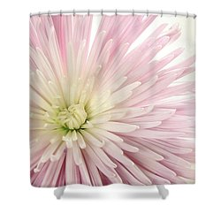 Pink Chrysanthemum Shower Curtain
