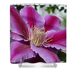 Shower Curtain featuring the photograph Pink Clematis Vine by Rebecca Overton