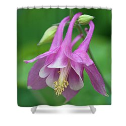 Shower Curtain featuring the photograph Pink Columbine - D010096 by Daniel Dempster