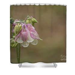 Pink Columbine II 2015 Shower Curtain