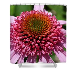 Pink Coneflower Close-up Shower Curtain
