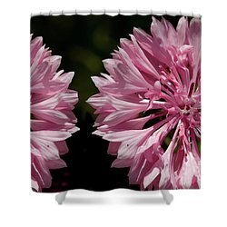 Pink Cornflowers Shower Curtain