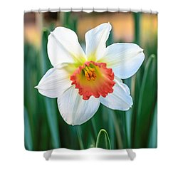 Pink Cup Solo Daffodil Shower Curtain