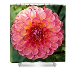 Pink Dahlia Shower Curtain